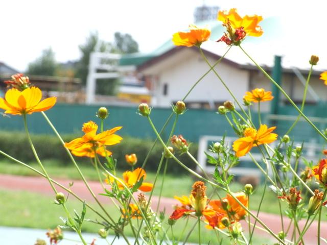 1 パドック脇の花